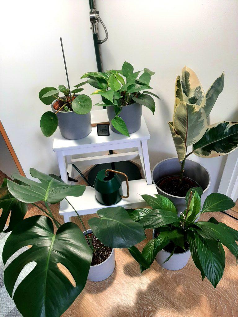 Daniels växter